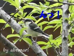 am1305252.JPG