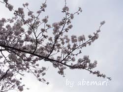 abemari1303221.JPG